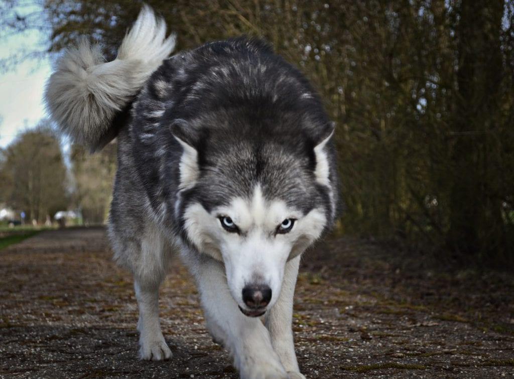 Denver Dog Bite Attorney